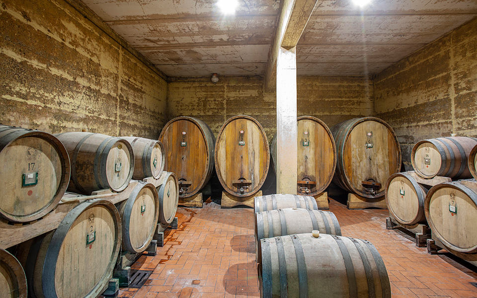 The cellar and the wine shop